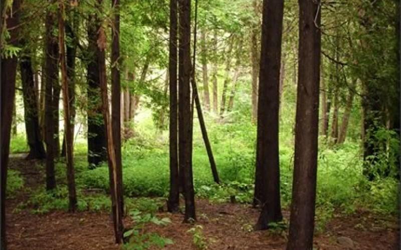 Career Choice: Forester