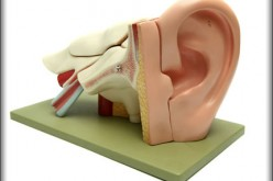 Career Choice: Audiologist