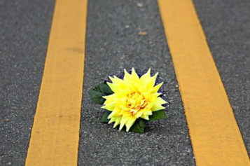University of Michigan: US Roads Are Safer