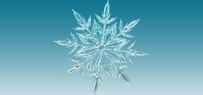 Are You a Campus Snowflake? Here are 3 Ways to Tell