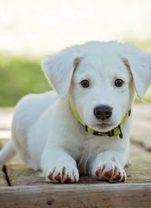 The Ultimate Dog Lover's Pet Guide for College Students! (Part 1/2)