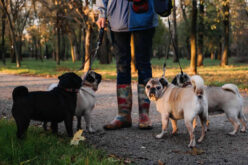 Tips for Becoming a Dog Walker