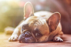 Bad Habits To Be Aware Of in Puppies