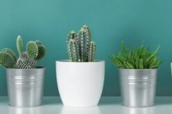 The Easiest Plants To Grow In Your Dorm Room